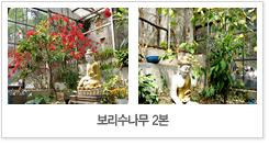 태종사 보리수나무 2본 사진